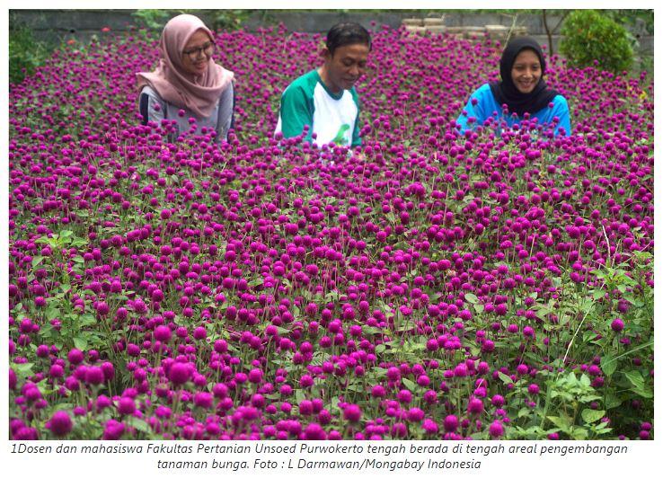 Perhimpunan Entomologi Indonesia Menghimpun Mengembangkan Dan Mengamalkan